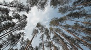 Stock Video Footage of Trees low angle view