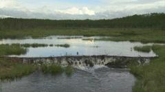 Beaver Dam Stock Footage