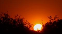Desert Brush Sunset Stock Footage