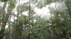 Rain falling in the interior of tropical rainforest Stock Footage