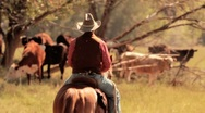 Stock Video Footage of Cowboy on Horse with Cattle