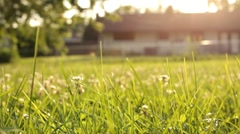 Focus on grass with house in background Stock Footage