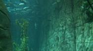 Stock Video Footage of Aquarium Tank