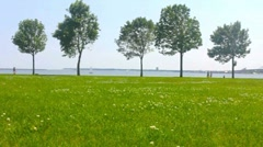 Dog Walkers and trees on the Lake Michigan shoreline Stock Footage
