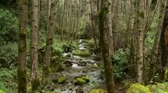 Stream runnning through forest Stock Footage