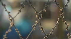 Flies on an wire fence. Focus shift Stock Footage