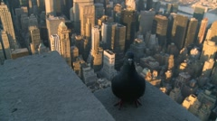 Pidgeon (two) on the Empire State Building Stock Footage
