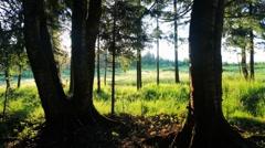 Summer sunrise timelapse Stock Footage