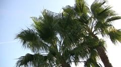 Palmtrees in the Summer Wind - stock footage