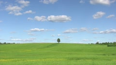 Solitary tree, summer landscape Stock Footage