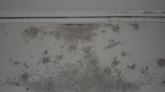 Grey Mold on a White Wall HD - stock footage