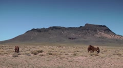 Three Horses in Arizona Desert Stock Footage