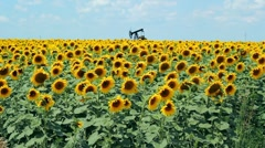 Dancing Sunflowers Stock Footage