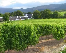 Vineyards Groot Constantia, Cape Town GFSD Stock Footage