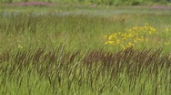 Wildflowers among tall grass Stock Footage