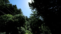 Point-of-View Driving Between Giant Redwood Trees Stock Footage