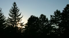 MISC SunSettingBehindTrees Stock Footage