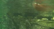 Stock Video Footage of Ducks swim at the Aquarium