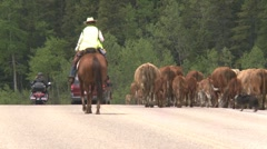 Agriculture,  high country western cattle drive, #14 rear angle long shot Stock Footage