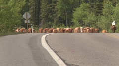 Agriculture,  high country western cattle drive, #13 rear angle long shot Stock Footage