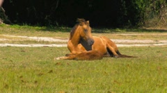 Horse and baby horse in green field (Full HD) Stock Footage