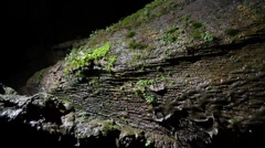 Vegetation in a lava tube Stock Footage