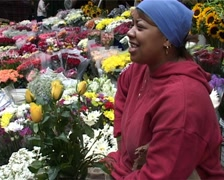 Adderley Street Flower Seller, Cape Town GFSD Stock Footage
