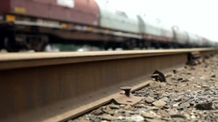 Train on Track low dolly view - stock footage