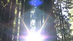 Redwoods Forest Sunlight Timelapse 02 Stock Footage
