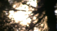 Redwoods Forest Sunlight  05 Focus In & Out Stock Footage