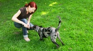 Stock Video Footage of woman and dog playfully fighting over stick