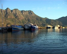 Seal in Hout Bay Harbour, Cape Town GFSD Stock Footage