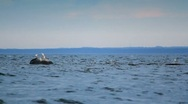 Seagulls on rock Stock Footage