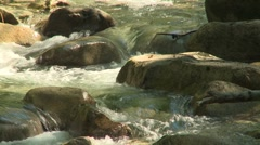 Index area creek 08 - stock footage