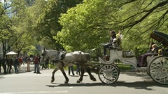 Horse drawn carriage in Central Park Stock Footage