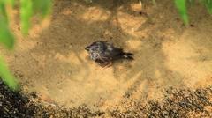Baby-BirdGround-One Stock Footage