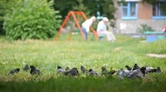 Pigeons near playground  fly forth Stock Footage