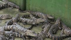 Alligator pit Stock Footage