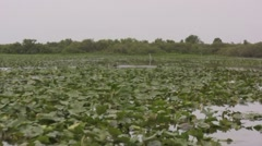 Drifting over lilly pads on a swampy river air boat ride - stock footage