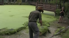 Stock Video Footage of Feeding an alligator