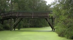 Going under a swamp bridge in the jungle - stock footage