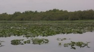 Stock Video Footage of hovering over lilly pads on a river air boat