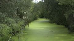 Jungle alligator swamp - stock footage