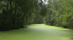 Jungle Bridge over the duck weed water - stock footage