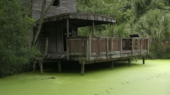 Old house on the river jungle duck weed - stock footage