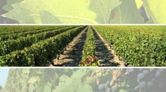 Montage of Wine & Healthy Food Stock Footage