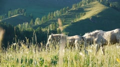 Stock Video Footage white horse and foal bay mare in the tall grass Stock Footage
