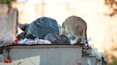 Homeless hungry cat in garbage bins Stock Footage