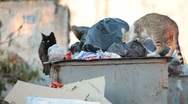 Stock Video Footage of homeless hungry cat in garbage bins