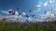 Spring flowers Stock Footage